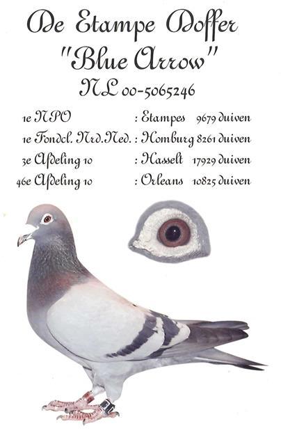 NL00-5065246