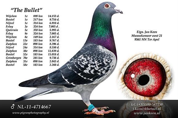 NL11-4714667